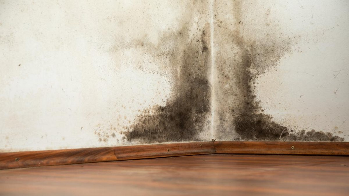 Mold exposure can cause serious damage