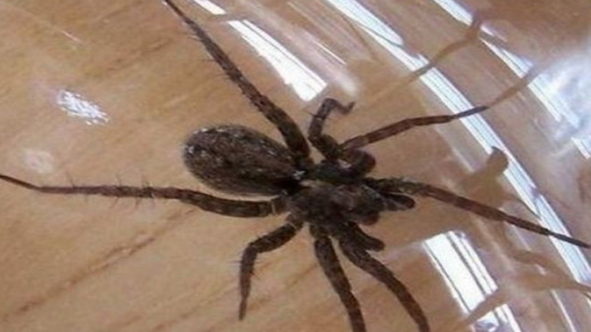 ways to keep spiders out of your house